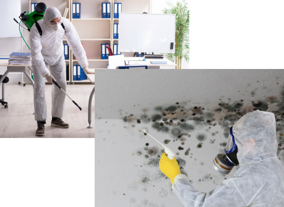 pes control and mold removal services